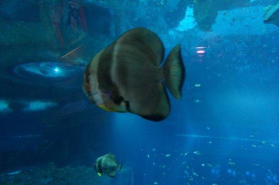 Resort World Sentosa - Beach Villas™ : Fish swimming by