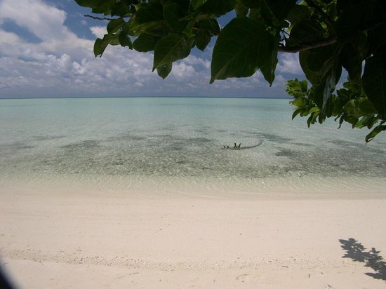 The Reef Dive Resort: la spiaggia dietro i bungalow