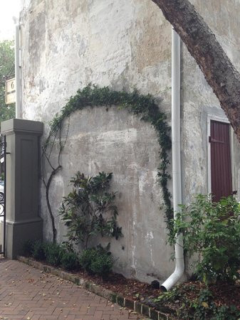 Zero George Street: Original distressed wall with artistic planting.