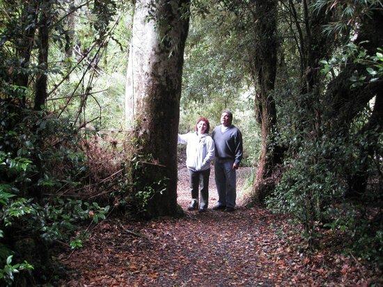 Termas de Aguas Calientes : El bosque