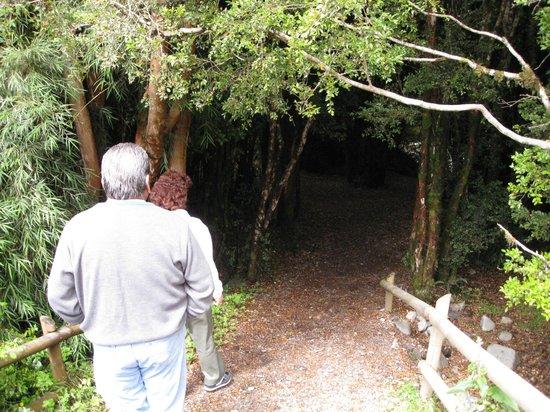 Termas de Aguas Calientes: Entrando al bosque
