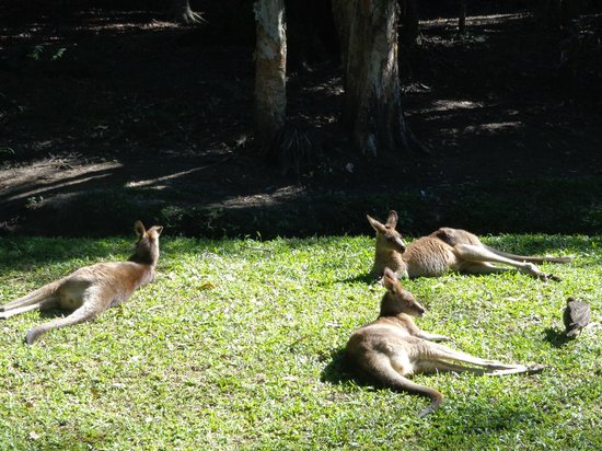 Australia Zoo: You can feed and pet the Kangaroos