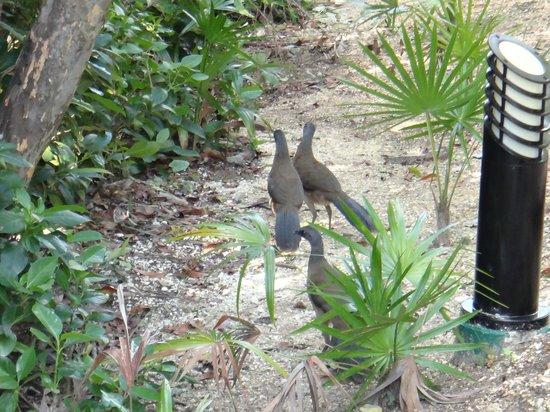 Grand Palladium Colonial Resort & Spa: more birds