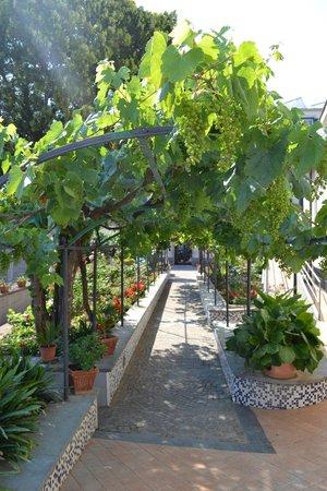 Domus San Vincenzo: Garden
