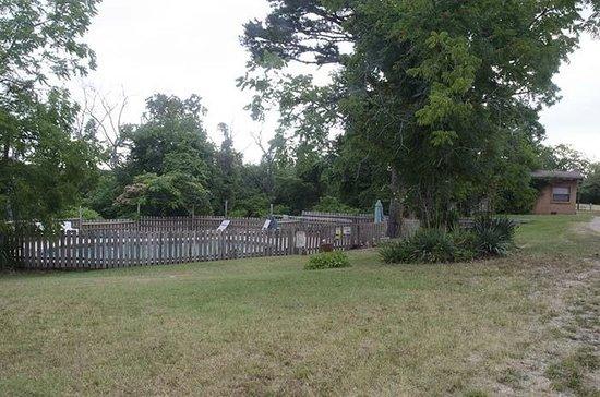 Green Tree Lodge: pool area