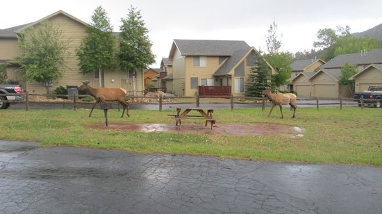 The Maxwell Inn: Elk passing through Maxwell Inn picnic area