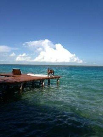 Casa Aq ab al : Bala desfrutando da lagoa no trapiche