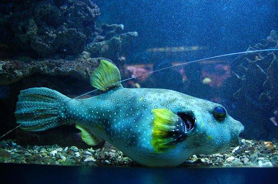 aquarium canet en roussillon foto aquarium de canet canet en roussillon tripadvisor