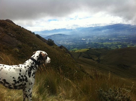The Secret Garden Cotopaxi: Walk with the dogs