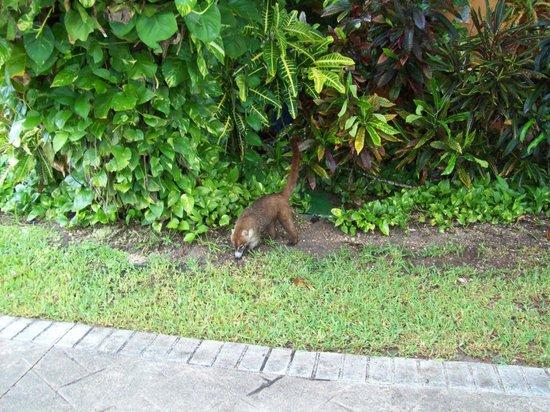 petit animal - Picture of Grand Bahia Principe Coba ... |Grand Bahia Principe Tulum Animals