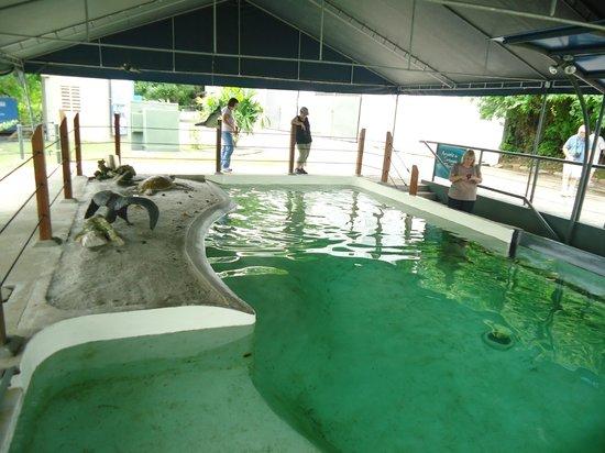 Estanque de tortuga y tiburones picture of punta culebra - Estanque para tortugas ...