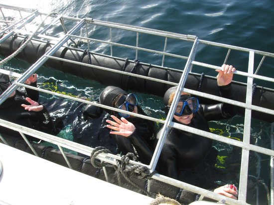 White Shark Diving Company: Inside the cage