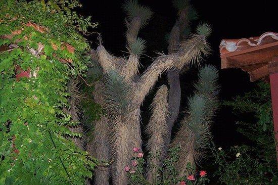 Joshua Tree Inn: grounds
