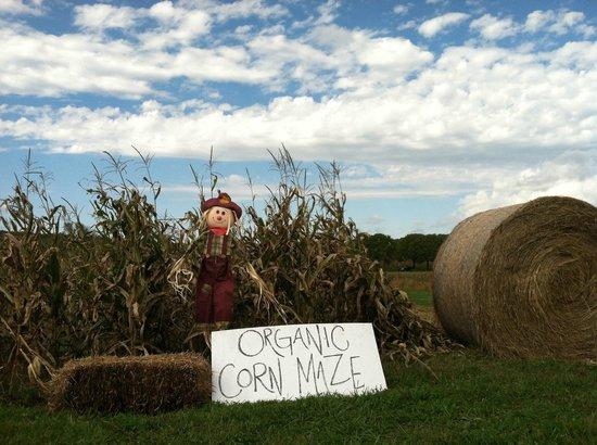 Airlie's Organic Corn Maze