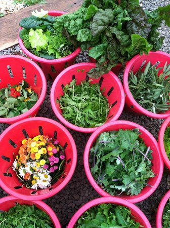 Garden Harvest at Airlie's Kitchen Garden