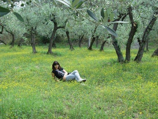 Terra Dei Santi Country House: percorso degli ulivi