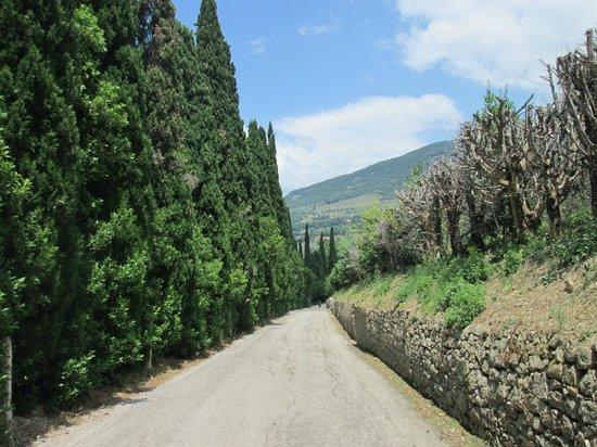 Terra Dei Santi Country House: percorso tra gli ulivi in bici