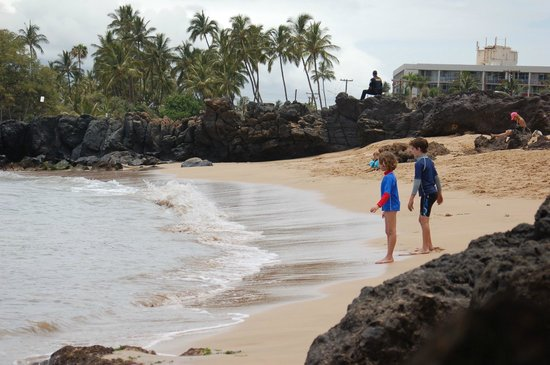 """Punahoa Beach Apartments : """"Private"""" beach area just to north of property"""