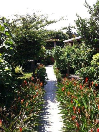 Monteverde Rustic Lodge: Garden