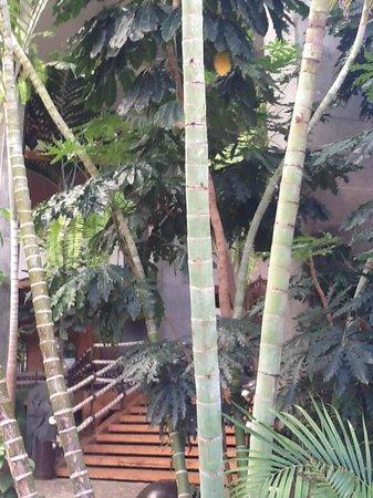 Princesa Yaiza Suite Hotel Resort: Jardin interior, extremadamente cuidado