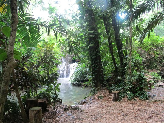 Waterfall Picture Of Chukka Caribbean Adventures