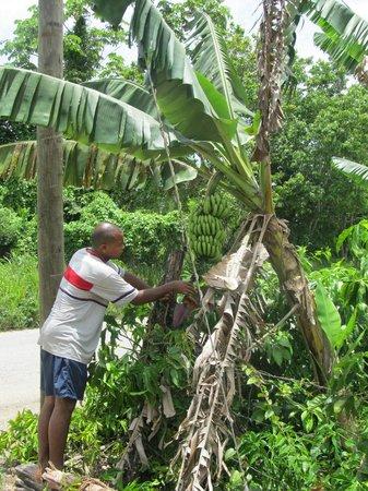 Chukka Caribbean Adventures Montego Bay Reviews Of