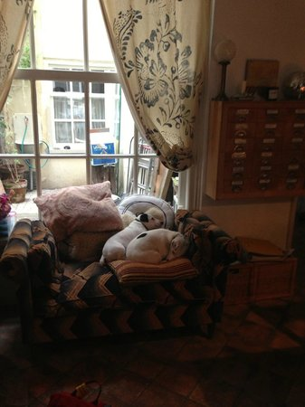 The Blue Sheep Bed & Breakfast Amsterdam: The dogs :)