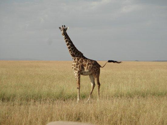 Tipilikwani Mara Camp - Masai Mara: .