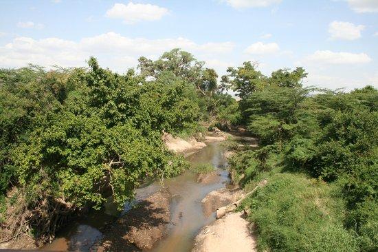 Tipilikwani Mara Camp - Masai Mara: River
