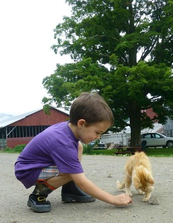 Liberty Hill Farm Inn: making friends