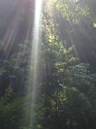 Devil's Millhopper Geological State Park: Beautiful sunrays!