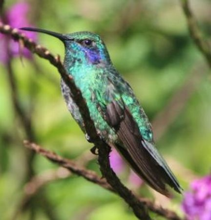 Mariposa Bed & Breakfast : Hummingbird