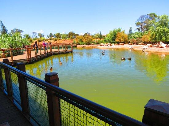 Jardin Zoologique National de Rabat : The Lake