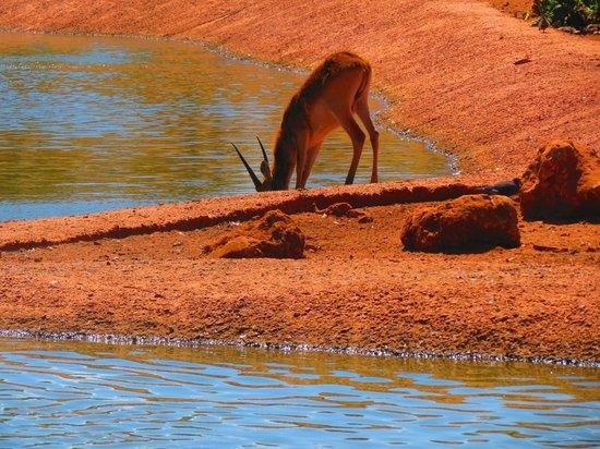 Jardin Zoologique National de Rabat : The Savana