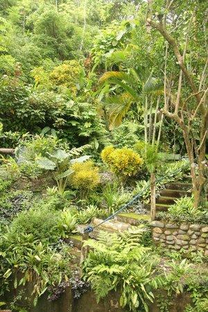 Hostel Plinio: the gardens!
