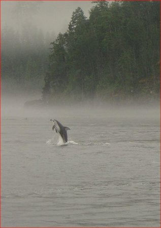 Aboriginal Journeys Wildlife and Adventure Tours : Dolphin in the Mist