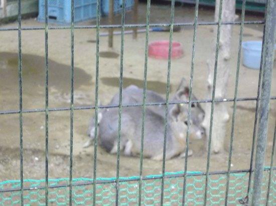 Asunaro no Sato: あすなろの里・ふれあい動物園のマーラ