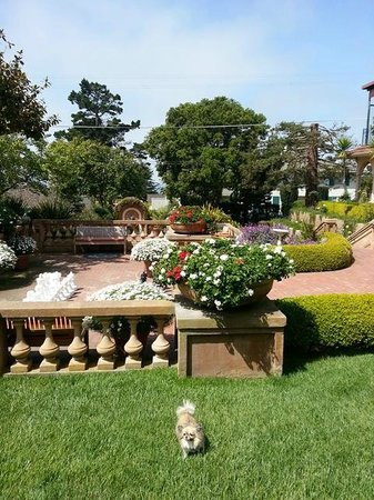 La Playa Carmel: My dog enjoys the pretty grounds at La Playa with the ocean in the background.