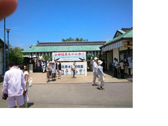 Suigo Sawara Hydrophyte Garden: ayame