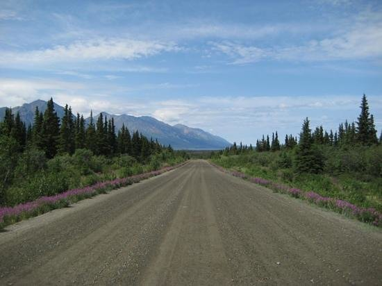 Kluane Bed & Breakfast : the road to the cabins, beautifully marked with flowers