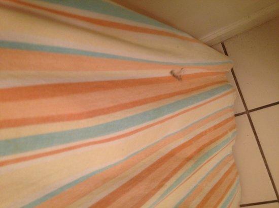 The Verandas: Shower