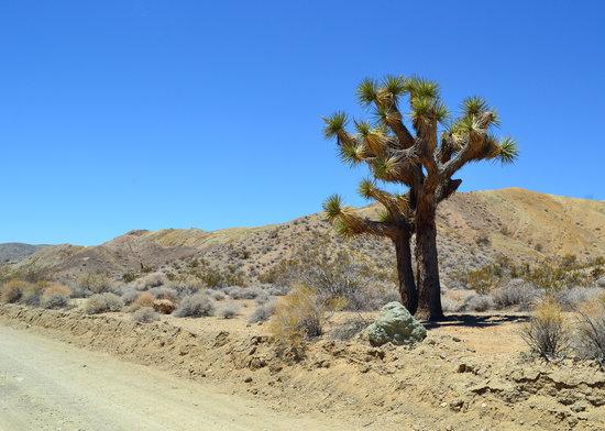 Rainbow Basin Natural Area : The road in to Rainbow Basin