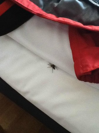 Comfort Hotel Xpress Stockholm Central: Spider running on the bed