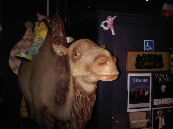 The Camelot Lounge: One Good Looking Camel