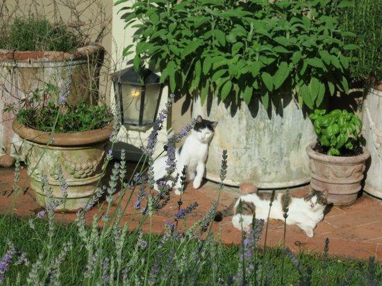 Asilo Masi : les chats vous transmettent leur quiétude