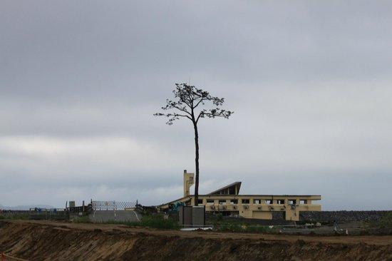 Miracle Lone Pine Tree: 奇跡の一本松