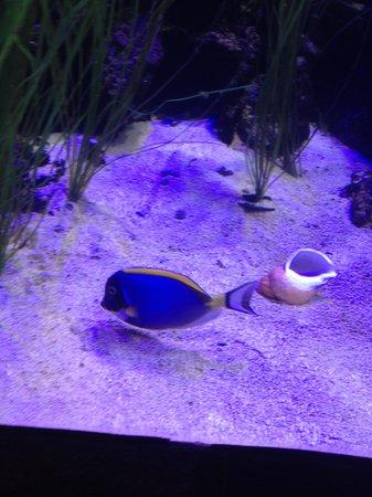 SEA LIFE Hannover: Nemo?