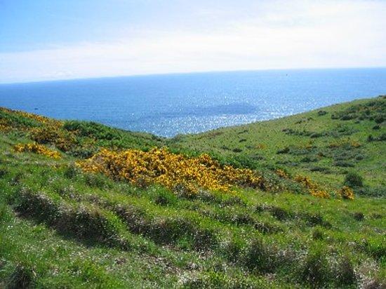 Maycroft: Coastal path on Jurassic coast