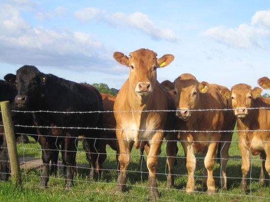 Roots Farm Shop: Livestock