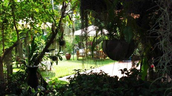 Siri House: Area de jardín en torno a un sauce llorón. Precioso